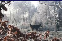 winter_103
