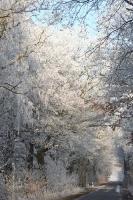 winter_105