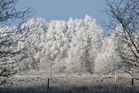 winter_106