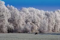 winter_107
